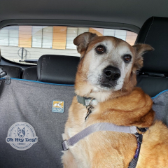 Shasta & Chance riding the Pet Taxi