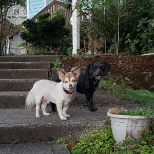 Small dogs on outdoor step