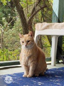 Cat on porch