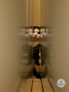 Cat peering from behind washer & dryer